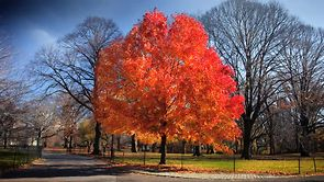 Fall in Central Park – New York