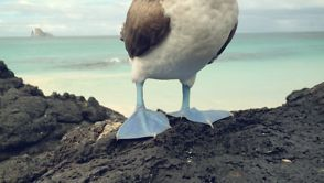 Galapagos – Shot with iPhone 4S